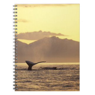 U.S.A., Alaska, Inside Passage Humpback whale at Spiral Note Books