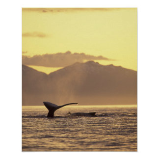 U.S.A., Alaska, Inside Passage Humpback whale at Poster