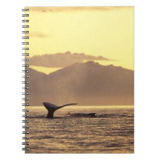 U.S.A., Alaska, Inside Passage Humpback whale at Spiral Note Book