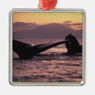 U.S.A., Alaska, Inside Passage Humpback whales Metal Ornament