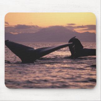 U.S.A., Alaska, Inside Passage Humpback whales Mouse Pad