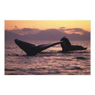 U.S.A., Alaska, Inside Passage Humpback whales Photo Print