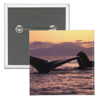 U.S.A., Alaska, Inside Passage Humpback whales Pinback Button