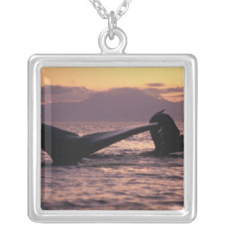 U.S.A., Alaska, Inside Passage Humpback whales Silver Plated Necklace