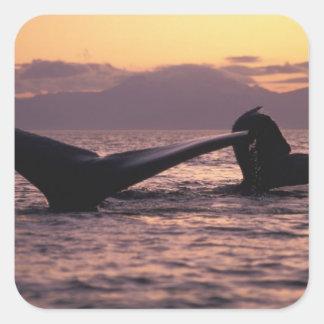 U.S.A., Alaska, Inside Passage Humpback whales Square Sticker