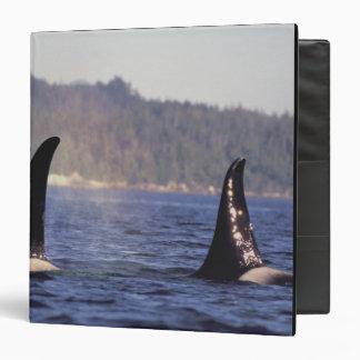 U.S.A., Alaska, Inside Passage Surfacing Orca 3 Ring Binder