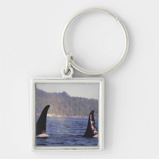 U.S.A., Alaska, Inside Passage Surfacing Orca Silver-Colored Square Keychain
