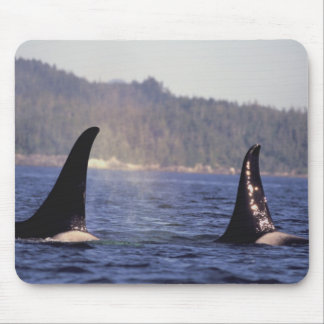 U.S.A., Alaska, Inside Passage Surfacing Orca Mouse Pad