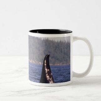 U.S.A., Alaska, Inside Passage Surfacing Orca Two-Tone Coffee Mug