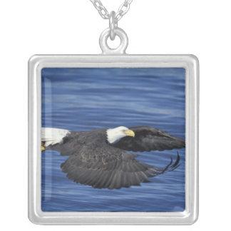 U.S.A., Alaska, Kenai Peninsula Bald eagle Silver Plated Necklace
