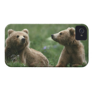 U.S.A., Alaska, Kodiak Two sub-adult brown bears iPhone 4 Case