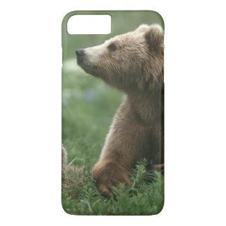 U.S.A., Alaska, Kodiak Two sub-adult brown bears iPhone 8 Plus/7 Plus Case