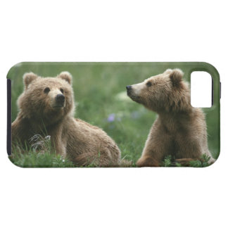 U.S.A., Alaska, Kodiak Two sub-adult brown bears iPhone SE/5/5s Case
