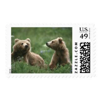 U.S.A., Alaska, Kodiak Two sub-adult brown bears Postage Stamp