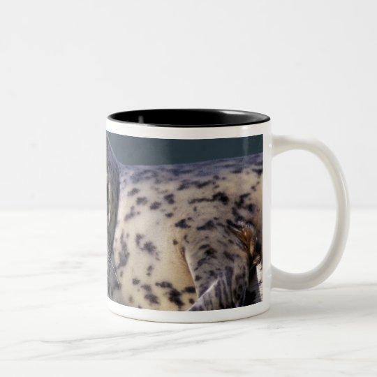 U.S.A., Alaska, Le Conte Glacier Close-up of Two-Tone Coffee Mug