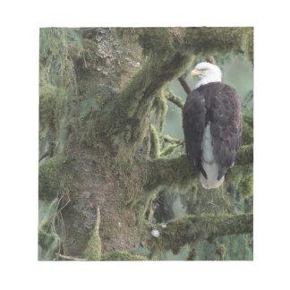 U.S.A., Alaska, Southeast Alaska Bald eagle Note Pad