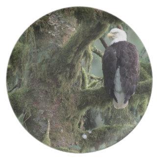 U.S.A., Alaska, Southeast Alaska Bald eagle Plates