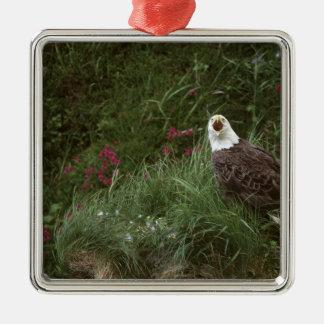 U.S.A., Alaska, Unalaska Island Bald eagle Metal Ornament