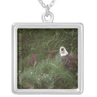 U.S.A., Alaska, Unalaska Island Bald eagle Silver Plated Necklace