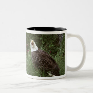 U.S.A., Alaska, Unalaska Island Bald eagle Two-Tone Coffee Mug