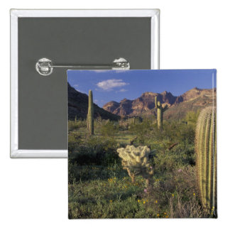 U.S.A., Arizona, Organ Pipe National Monument. 2 Inch Square Button