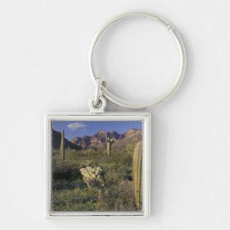 U.S.A., Arizona, Organ Pipe National Monument. Keychain