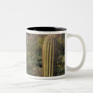 U.S.A., Arizona, Organ Pipe National Monument. Two-Tone Coffee Mug