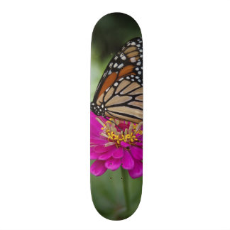 U.S.A., Massachusetts, Boylston, Tower Hill Skate Board Decks