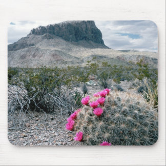U.S.A., Texas, Big Bend National Park. Blooming Mouse Pad