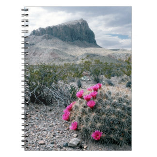 U.S.A., Texas, Big Bend National Park. Blooming Notebook