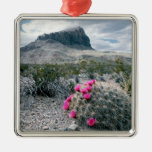 U.S.A., Texas, Big Bend National Park. Blooming Christmas Tree Ornaments