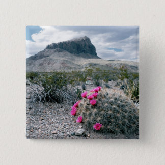 U.S.A., Texas, Big Bend National Park. Blooming Pinback Button