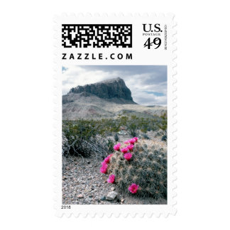 U.S.A., Texas, Big Bend National Park. Blooming Postage