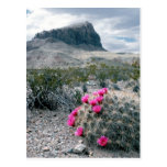 U.S.A., Texas, Big Bend National Park. Blooming Postcard