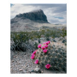U.S.A., Texas, Big Bend National Park. Blooming Poster