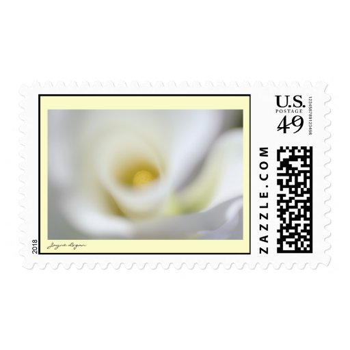 U.S. Postage Stamp - Dreamy White Calla Lily Stamp