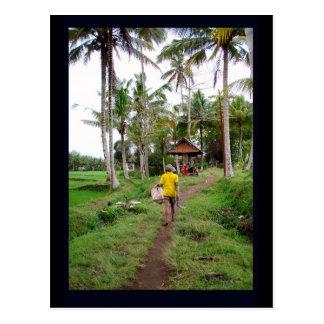 Ubud Bali Post Card