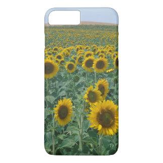 UE, Francia, Provence, campo del girasol Funda iPhone 7 Plus