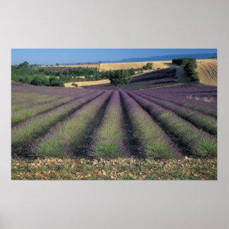 UE, Francia, Provence, campos 2 de la lavanda Impresiones