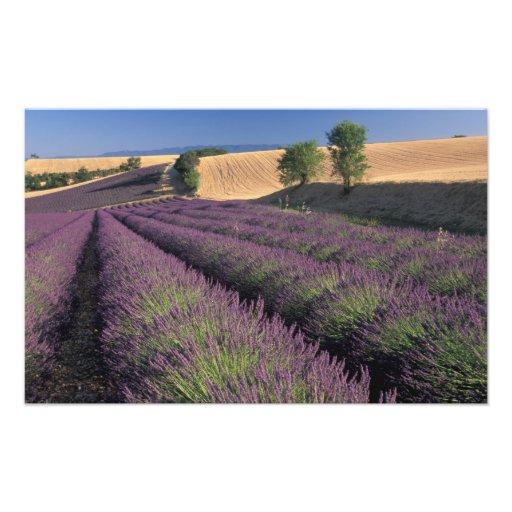 UE, Francia, Provence, campos 3 de la lavanda Fotografía