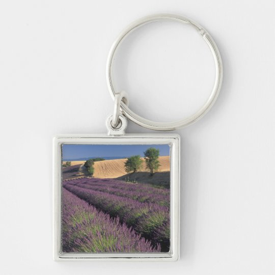 UE, Francia, Provence, campos 3 de la lavanda Llavero Cuadrado Plateado