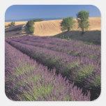 UE, Francia, Provence, campos 3 de la lavanda Pegatina Cuadrada