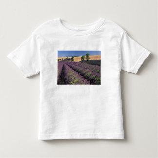 UE, Francia, Provence, campos 3 de la lavanda T Shirt