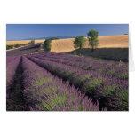 UE, Francia, Provence, campos 3 de la lavanda Felicitación