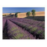 UE, Francia, Provence, campos 3 de la lavanda Postal