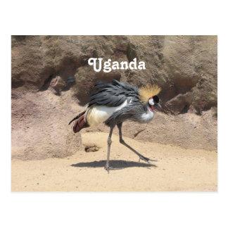 Uganda Crested Crane Postcard