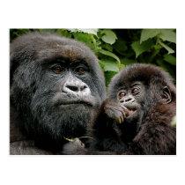 Ugandan Mother & Baby Gorilla Postcard