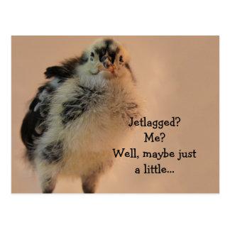 Ugly Chick Postcard