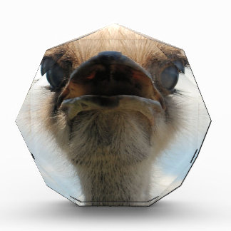 Ugly Man Ostrich Acrylic Award