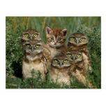 uil en kitten wens kaart